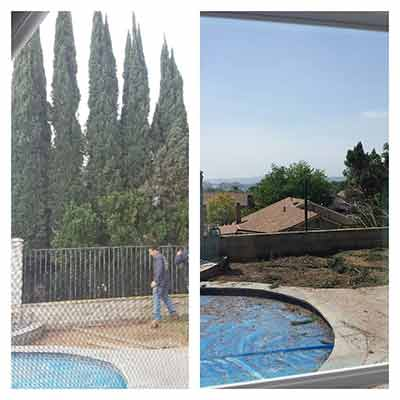 Tree Removal in San Diego County from Estates Tree Services