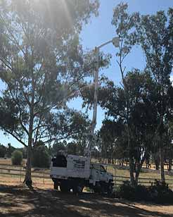 Estates Tree Service Tree Maintenance
